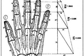 "Poem: ""Hands"""